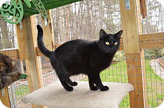 Cat Rescue Wilson Nc