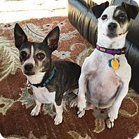 Adopt A Pet :: Dillon and Darlin - Georgetown, KY