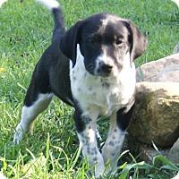 Adopt A Pet :: BW - Plainfield, CT