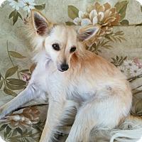 Adopt A Pet :: Vos - Lansing, MI