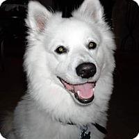 Adopt A Pet :: Kane of Richmond Va - Mooresville, NC