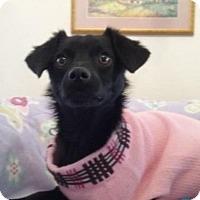 Adopt A Pet :: Cher - Gilbert, AZ