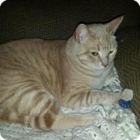 Adopt A Pet :: Snuggles - Sacramento, CA