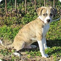 Adopt A Pet :: SETH - Bedminster, NJ