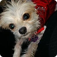 Adopt A Pet :: KoKo - San Dimas, CA