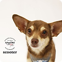 Adopt A Pet :: Scooter - Aqua Dulce, CA