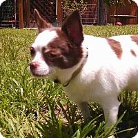 Adopt A Pet :: Denny - Windermere, FL