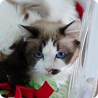 Adopt A Pet :: Dianna - Greenwood, SC