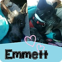 Terrier (Unknown Type, Small) Mix Dog for adoption in Mesa, Arizona - EMMETT