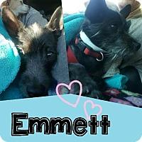 Adopt A Pet :: EMMETT - Mesa, AZ