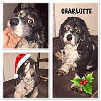 Adopt A Pet :: Charlotte - Santa Barbara, CA