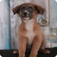 Adopt A Pet :: Marley - Waterbury, CT