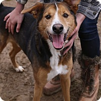 Border Collie/Feist Mix Dog for adoption in Broadway, New Jersey - Oliver