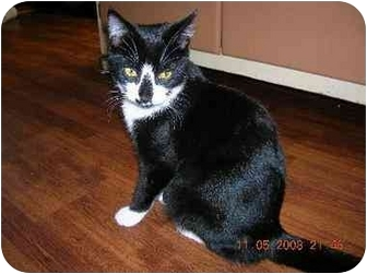 Domestic Shorthair Cat for adoption in Union, South Carolina - Face
