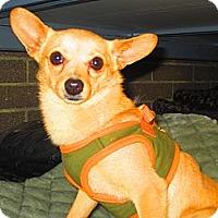 Adopt A Pet :: Jack - Culver City, CA