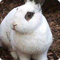 Adopt A Pet :: Picassa - Santa Barbara, CA
