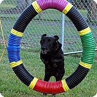 Adopt A Pet :: Eva - Sarasota, FL