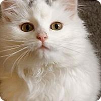 Adopt A Pet :: Henrietta - Silver Lake, WI