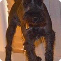 Adopt A Pet :: Buster/Tobias - Phoenix, AZ