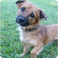 Adopt A Pet :: Tawni - Mocksville, NC