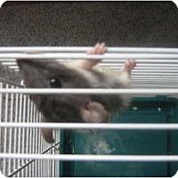 Adopt A Pet :: Jermaine - Cincinnati, OH