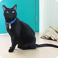 Adopt A Pet :: Ralphie - Lakewood, CO