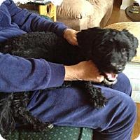 Adopt A Pet :: Nolan - Rockaway, NJ