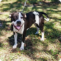 Adopt A Pet :: Moo - Lake Worth, FL