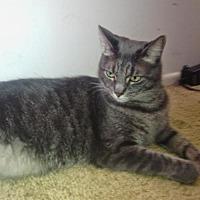 Adopt A Pet :: Smokey - St. Cloud, FL