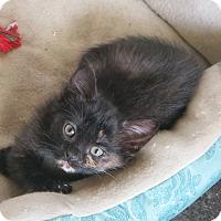 Adopt A Pet :: Lottie - Bentonville, AR