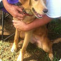 Adopt A Pet :: Sadie IV - BIRMINGHAM, AL
