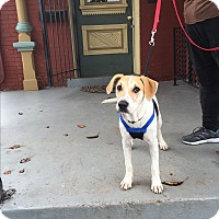 Adopt A Pet :: Zoey - Nashville, TN
