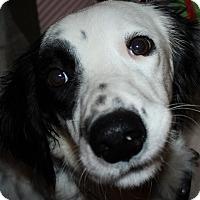 Adopt A Pet :: MAX - Pine Grove, PA
