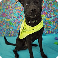 Adopt A Pet :: JAKE - New Manchester, WV