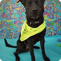 Adopt A Pet :: JAKE - New Cumberland, WV