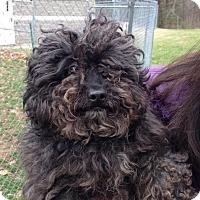 Adopt A Pet :: Jalen - Bloomfield, CT