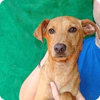 Adopt A Pet :: Baja - Oviedo, FL