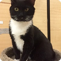 Adopt A Pet :: Vince - Monroe, GA