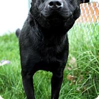 Adopt A Pet :: Brandy - Appleton, WI