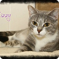 Adopt A Pet :: Lizzy - Shippenville, PA