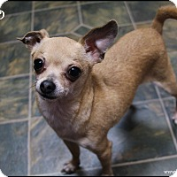Adopt A Pet :: Chico - Rockwall, TX
