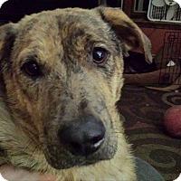 Adopt A Pet :: Julie - Hollis, ME