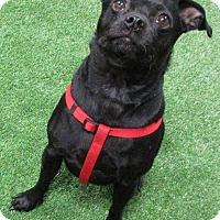 Adopt A Pet :: Harley - Edmonton, AB