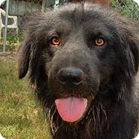 Adopt A Pet :: Quartermane - Denver, CO