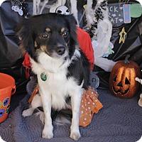 Adopt A Pet :: Leena - San Antonio, TX
