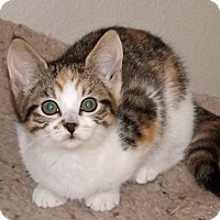 Adopt A Pet :: Dianna - Salem, OR