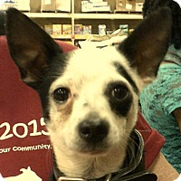 Adopt A Pet :: ACE - Newnan, GA