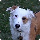 Adopt A Pet :: Wishbone (Has Application)