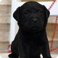 Adopt A Pet :: Alfred - Waldorf, MD