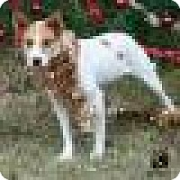 Adopt A Pet :: BRIDGETT - Tomball, TX
